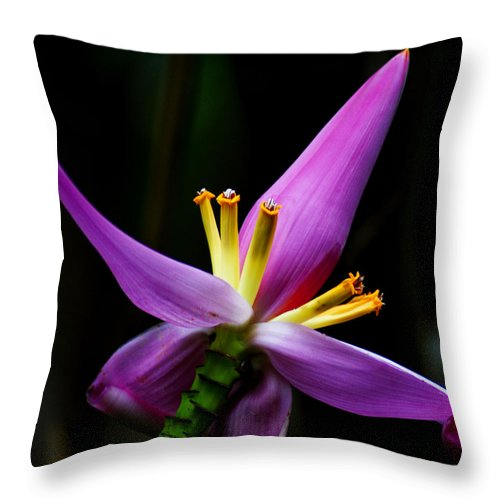 Flower Throw Pillow featuring the photograph Tropical Flower by Brian Kerls