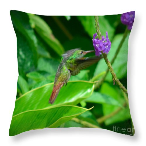 Green Throw Pillow featuring the photograph Tropical Hummingbird by Gary Keesler