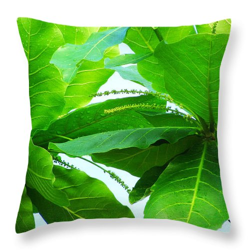 Leaves Throw Pillow featuring the photograph Tropical Noni Leaves by Roselynne Broussard