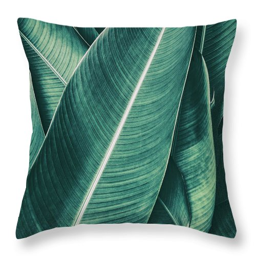 Spa Throw Pillow featuring the photograph Tropical Palm Leaf, Dark Green Toned by Pernsanitfoto
