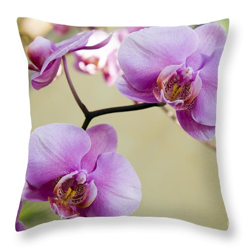 Orchid Throw Pillow featuring the photograph Tropical Radiant Orchid Flowers by Andee Design