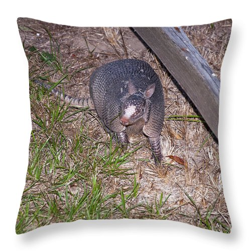 Schulenburg Texas Armadillo Armadillo Animal Animals Creature Creatures Throw Pillow featuring the photograph Trouble by Bob Phillips
