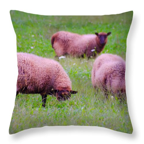 Trouble Throw Pillow featuring the photograph Trouble Comes In Three's by Bill Cannon