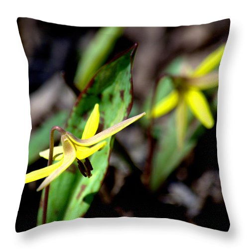 Trout Lily Throw Pillow featuring the photograph Trout Lilies by Urbanmoon Photography