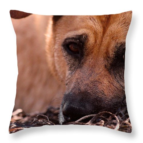 Dog Throw Pillow featuring the photograph True Love by Dana DiPasquale