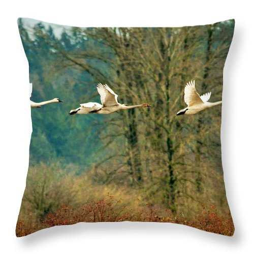 Wildlife Throw Pillow featuring the photograph Trumpeters Five by Claude Dalley