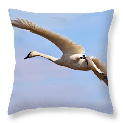 Mallard Throw Pillow featuring the photograph Trumpter Swan by Kevin Pugh
