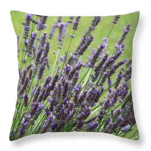 Lavender Throw Pillow featuring the photograph Tuilieres Lavender by Carol Groenen