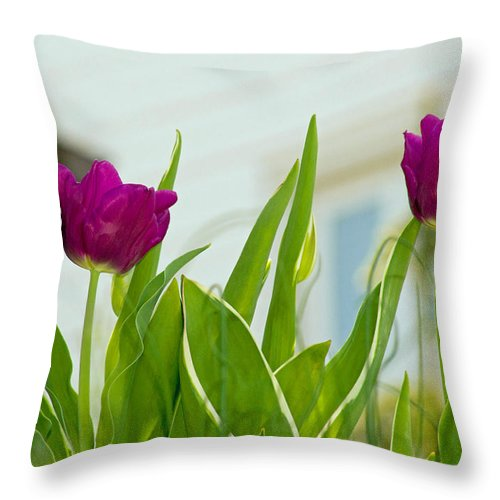 Blossom Throw Pillow featuring the photograph Tulip 4 by Howard Tenke