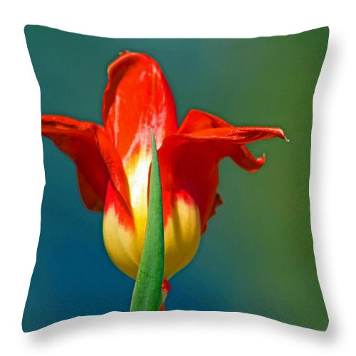 Yellow Throw Pillow featuring the photograph Tulip 5 by Howard Tenke