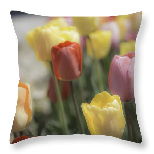 Blooms Throw Pillow featuring the photograph Tulip Display by Carolyn Fox
