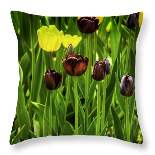 Usa Throw Pillow featuring the photograph Tulip Race Time by LeeAnn McLaneGoetz McLaneGoetzStudioLLCcom
