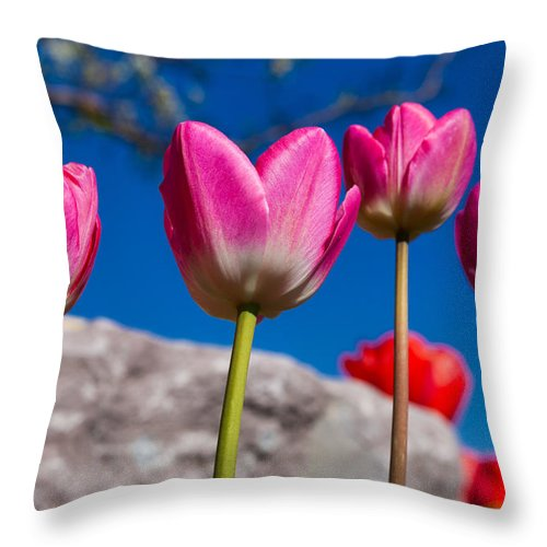 Tulip Revival Throw Pillow featuring the photograph Tulip Revival by Chad Dutson