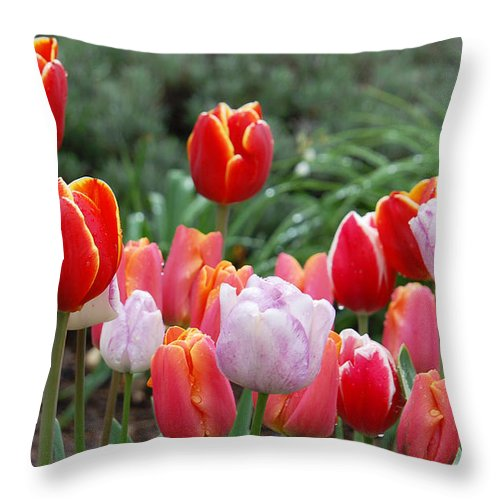 Tulip Throw Pillow featuring the photograph Tulip Tango by Suzanne Gaff