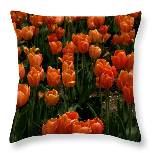 Flowers Throw Pillow featuring the photograph Tulip Time by Caroline Stella