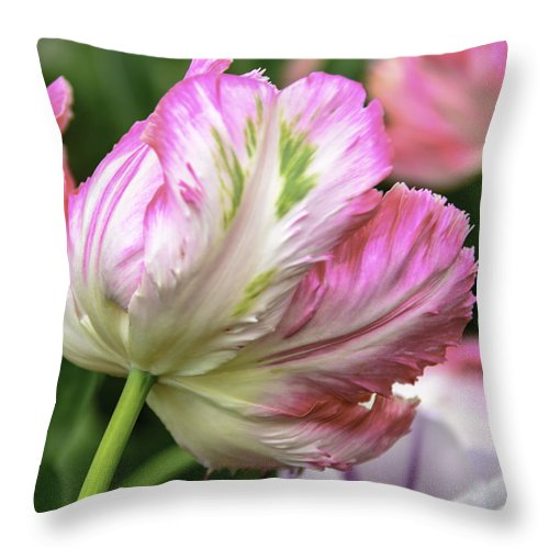 Usa Throw Pillow featuring the photograph Tulip Time Pink And White by LeeAnn McLaneGoetz McLaneGoetzStudioLLCcom