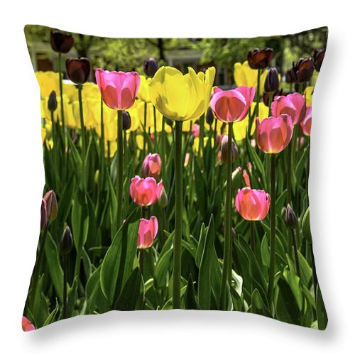 Usa Throw Pillow featuring the photograph Tulip Time Pink Yellow Black Beauty by LeeAnn McLaneGoetz McLaneGoetzStudioLLCcom