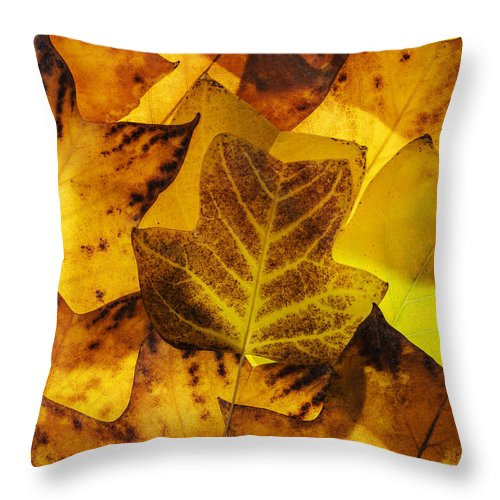 Autumn Throw Pillow featuring the photograph Tulip Tree Leaves In Autumn by Vishwanath Bhat
