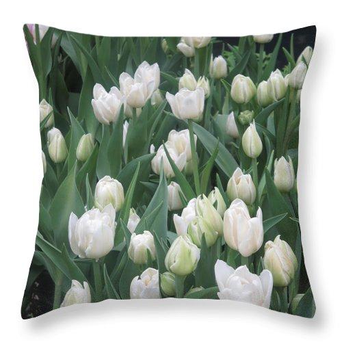 Flower Throw Pillow featuring the photograph Tulip White Show Flower Butterfly Garden by Navin Joshi