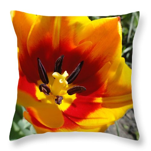 Tulipa Throw Pillow featuring the photograph Tulipa by Lisa Thomas