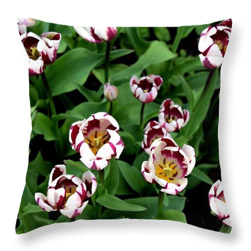Botanical Gardens Throw Pillow featuring the photograph Tulips 2 by Stacy Shebesta