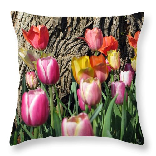 Tulip Throw Pillow featuring the photograph Tulips - Field With Love 07 by Pamela Critchlow