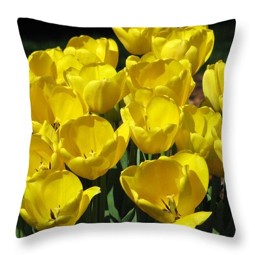 Tulip Throw Pillow featuring the photograph Tulips - Field With Love 17 by Pamela Critchlow