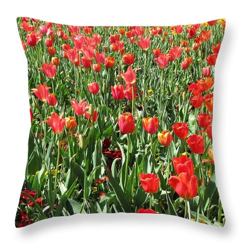 Tulip Throw Pillow featuring the photograph Tulips - Field With Love 61 by Pamela Critchlow