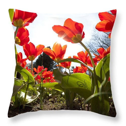 Tulips Throw Pillow featuring the photograph Tulips In Spring by Alexey Stiop