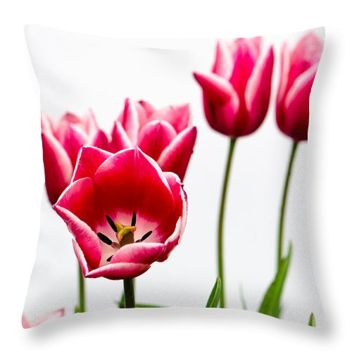 Throw Pillow featuring the photograph Tulips Say Hello by Michael Arend
