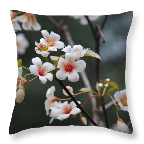 Tung Oil Throw Pillow featuring the photograph Tung Oil Blossoms by Suzanne Gaff