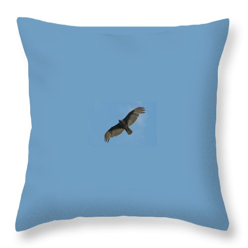 Turkey Throw Pillow featuring the photograph Turkey Buzzard 1 by Photos By Cassandra