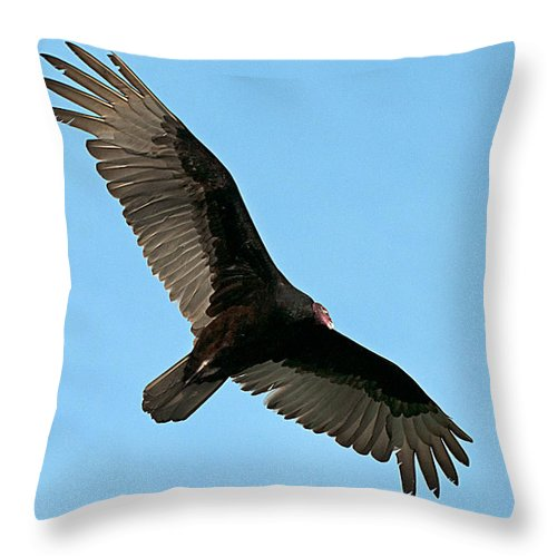 Turkey Throw Pillow featuring the photograph Turkey Buzzard 2 by Photos By Cassandra