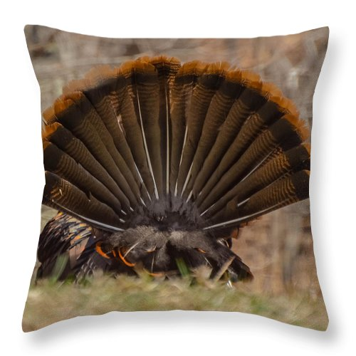 Turkey Throw Pillow featuring the photograph Turkey Tail by Amy Porter