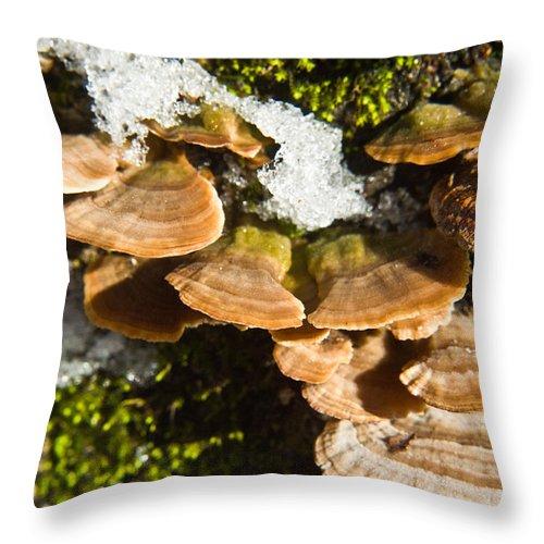 Turkey Throw Pillow featuring the photograph Turkey Tail Bracket Fungi by Douglas Barnett