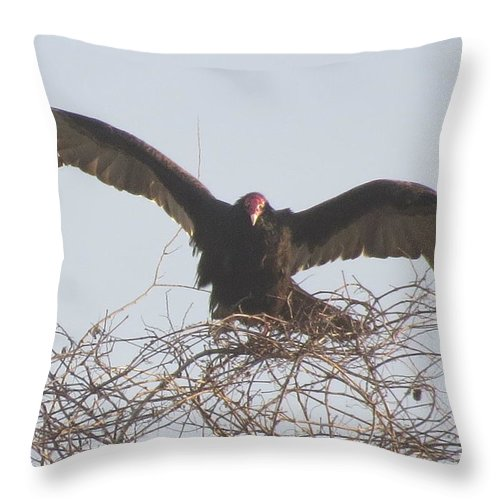 Birds Of Florida Throw Pillow featuring the photograph Turkey Vulture by Ellen Meakin