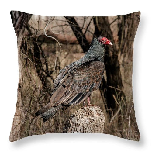 Animal Throw Pillow featuring the photograph Turkey Vulture Portrait by Robert Frederick