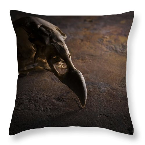 Vulture Throw Pillow featuring the photograph Turkey Vulture Skull On Slate by Art Whitton