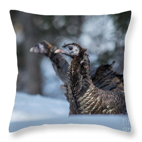 Wild Throw Pillow featuring the photograph Turkeys In The Snow by Cheryl Baxter