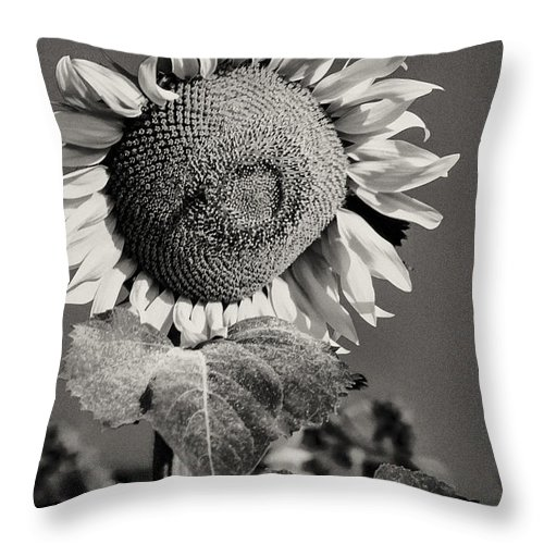 Gallipoli Turkey Sunflower Sunflowers Flower Flowers Petal Petals Seed Seeds Leaf Leaves Plant Plants Nature Black And White Sepia Throw Pillow featuring the photograph Turkish Sunflower 3 by Bob Phillips