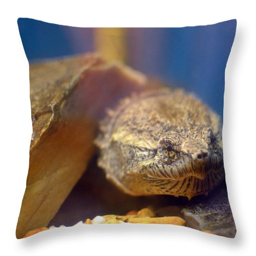 Turtle Throw Pillow featuring the photograph Turtle Portrait by Maggy Marsh