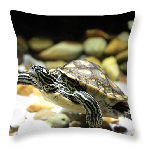 Turtle Throw Pillow featuring the photograph Turtles In The Water by Dwight Cook
