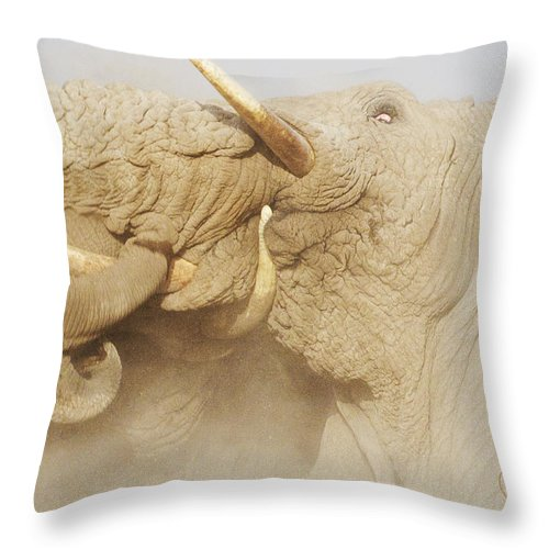 Elephant Throw Pillow featuring the photograph Tusker Tension by PiperAnne Worcester