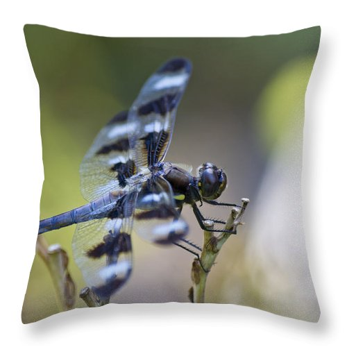 Twelve Spot Dragonfly Throw Pillow featuring the photograph Twelve Spot Hanging Out by Shelly Gunderson