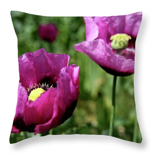 Poppy Throw Pillow featuring the photograph Twin Poppies by Christiane Schulze Art And Photography