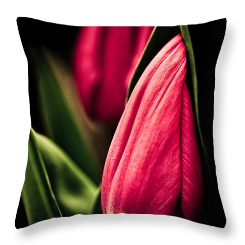 Beautiful Throw Pillow featuring the photograph Twin Tulips by Venetta Archer