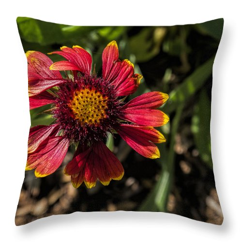 Flower Throw Pillow featuring the photograph Twisted Petals by Jo-Anne Gazo-McKim