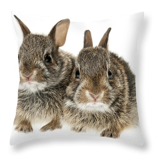 Rabbits Throw Pillow featuring the photograph Two Baby Bunny Rabbits by Elena Elisseeva