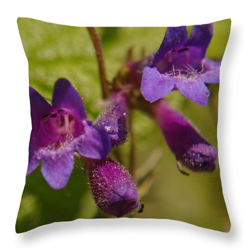 Flowers Throw Pillow featuring the photograph Two Beautiful Twins by Jeff Swan