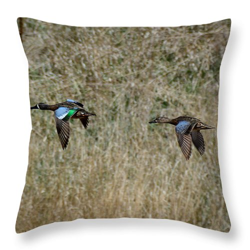South Dakota Throw Pillow featuring the photograph Two Blue Winged Teal by M Dale